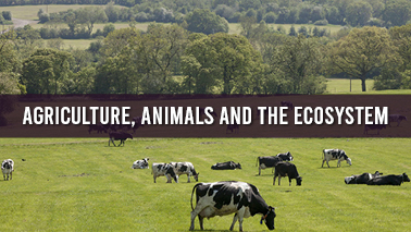 Peers Alley Media: Agriculture, Animals and the Ecosystem