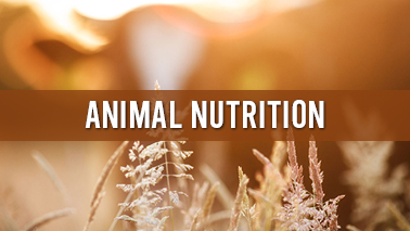 Peers Alley Media: Animal Nutrition