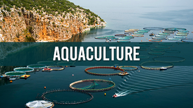 Peers Alley Media: Aquaculture