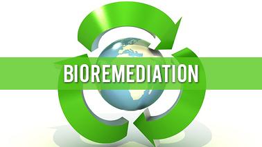 Peers Alley Media: Bioremediation