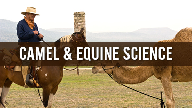 Peers Alley Media: Camel and Equine Science