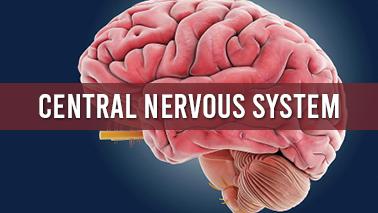 Peers Alley Media: Central Nervous System
