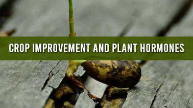 Peers Alley Media: Crop Improvement and Plant Hormones