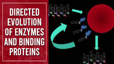 Peers Alley Media: Directed evolution of enzymes and binding proteins