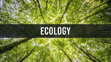 Peers Alley Media: Ecology