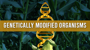 Peers Alley Media: Genetically Modified Organisms