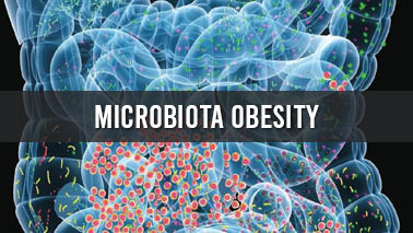 Peers Alley Media: Microbiota Obesity