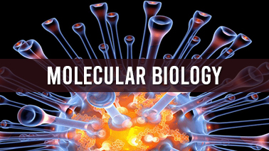 Peers Alley Media: Molecular biology