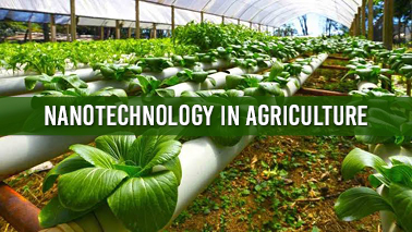 Peers Alley Media: Nanotechnology in Agriculture