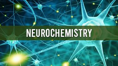Peers Alley Media: Neurochemistry