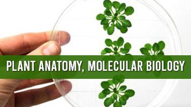 Peers Alley Media: Plant Anatomy, Molecular Biology