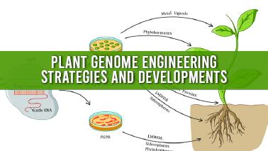 Peers Alley Media: Plant Genome Engineering Strategies and Developments
