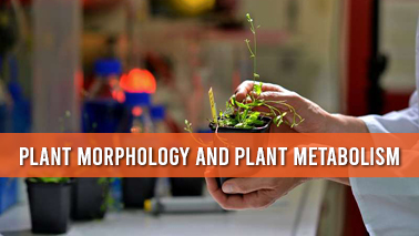 Peers Alley Media: Plant Morphology and Plant Metabolism