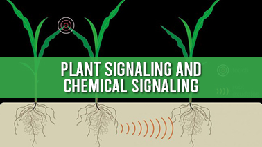 Peers Alley Media: Plant Signaling and Chemical Signaling