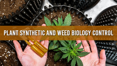 Peers Alley Media: Plant Synthetic and Weed Biology Control