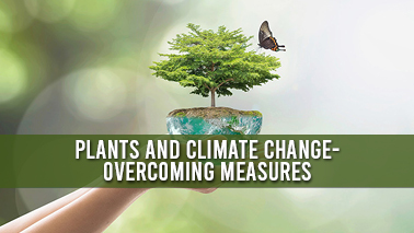 Peers Alley Media: Plants and Climate Change- Overcoming Measures