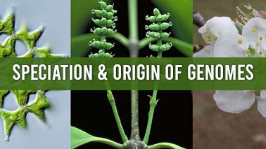 Peers Alley Media: Speciation  Origin of Genomes
