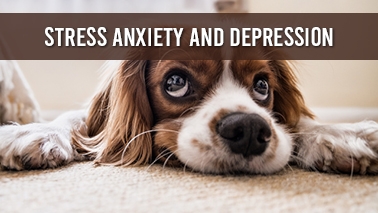 Peers Alley Media: Stress, Anxiety and Depression
