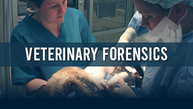 Peers Alley Media: Veterinary Forensics