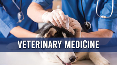 Peers Alley Media: Veterinary Medicine