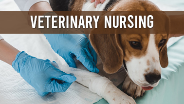Peers Alley Media: Veterinary Nursing