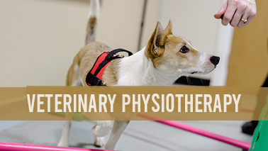 Peers Alley Media: Veterinary Physiotherapy