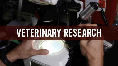 Peers Alley Media: Veterinary Research
