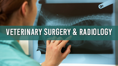 Peers Alley Media: Veterinary Surgery and Radiology